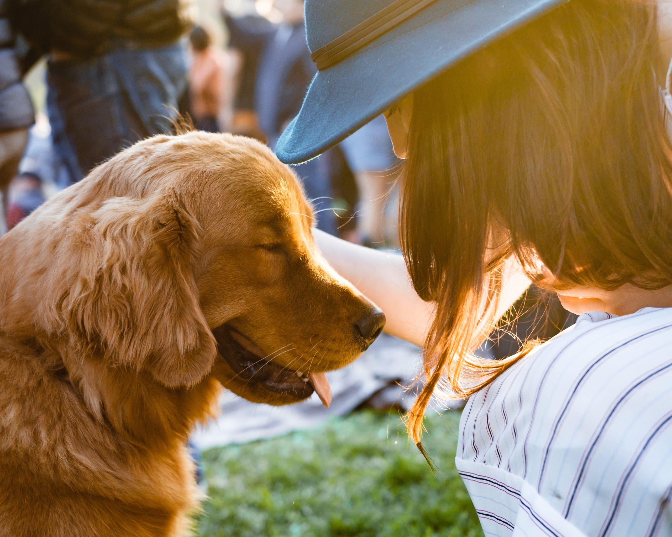 Hond op festival